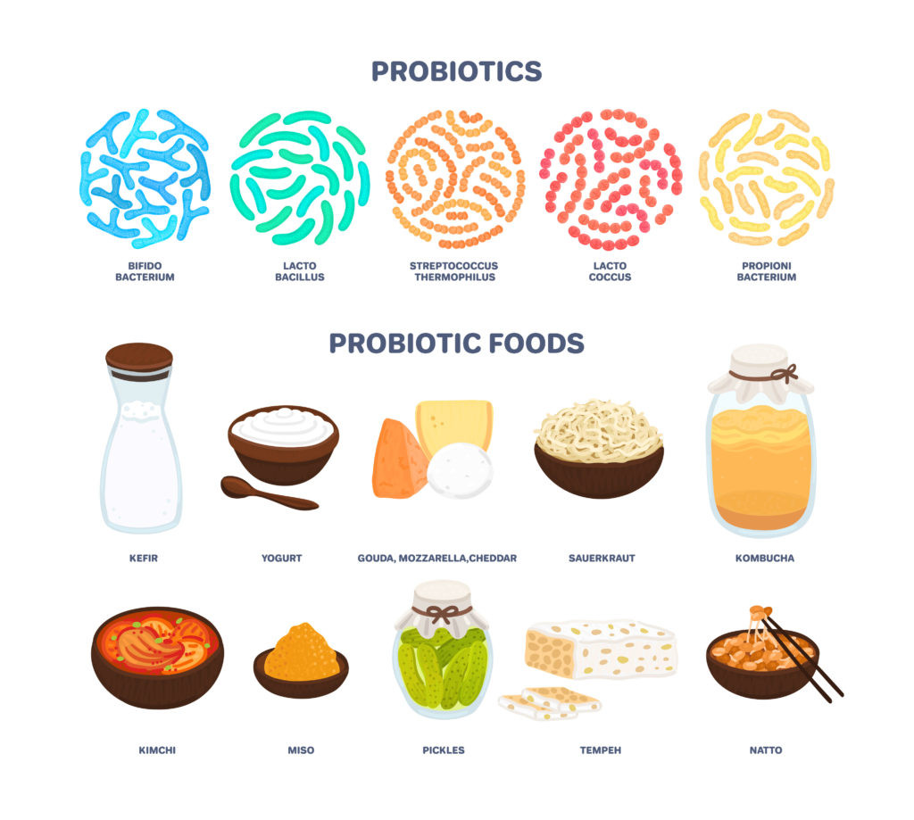Best sources of probiotics. Beneficial bacteria improve health. Isolated elements is for label, brochure, menu, advertising, article about diets, healthy and proper nutrition